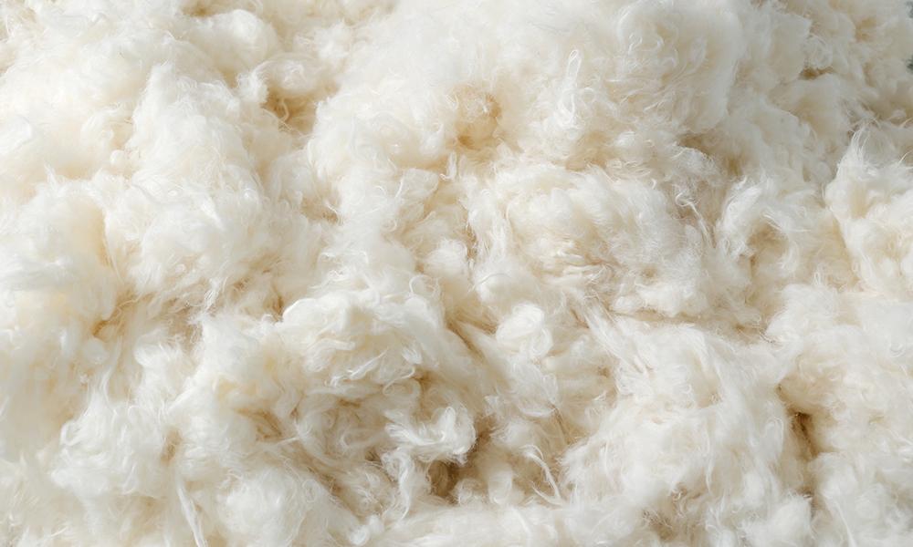 生地作りの鍵は綿に